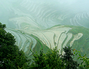 China: rice terraces